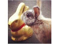 Loving home needed for beloved girl rabbit