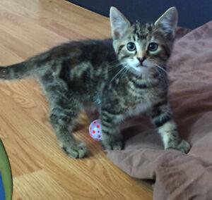 5 gorgeous kittens ready for adoption !