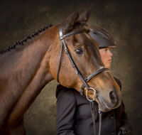 Equine Photos and Canvas Print