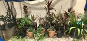 Assorted potted plants Mount Sheridan Cairns City Preview