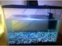 Tank 4 tetra fish