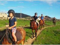 Horse loan