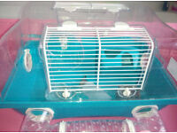 Hamster home for a boy - blue colour- For Easter? /good for mouse, mini rabbit, little animals/