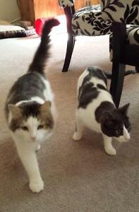 """Young Male Cat: """"Freddy & Petey"""""""
