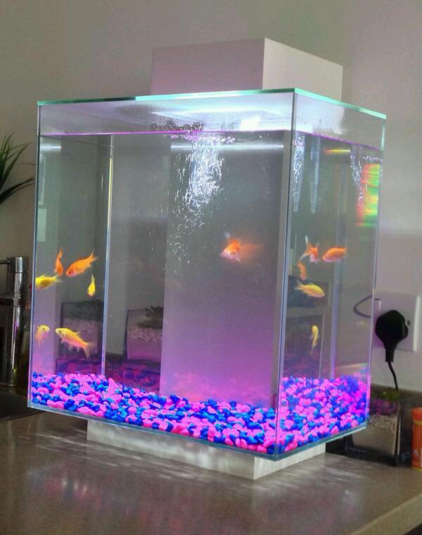 Fluval edge 46l fish tank full set up in barking for Fluval edge fish tank