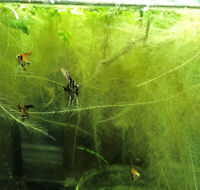 AFK's Fresh Water Fish and Inverts