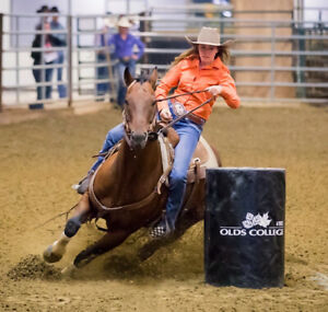 1D-2D high school rodeo/college rodeo barrel horse