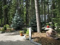 Two RV Lots side-by-side - Tall Timber RV Resort, Sundre AB