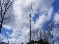 Professional Tree Services- Tree Removal & Trimming