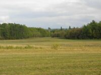 Cultivatated Land 125 Acres  2 Miles West of Town of Peace River