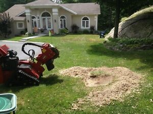 AFFORDABLE STUMP GRINDING AND REMOVAL. Kingston Kingston Area image 3