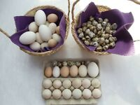 QUAILS EGGS & OTHER FOR SALE