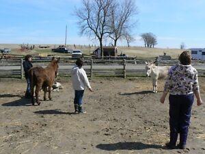 Animal Equine Reiki Training Cobourg ON 905-377-1743 Kawartha Lakes Peterborough Area image 3