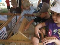 Petting Zoo, Mobile Petting zoo, Ponyrides, Summer Camp
