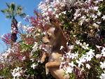 benevolentflowers