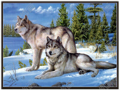 3D Lenticular- 3 Images of Wolves in One Poster - 12x16