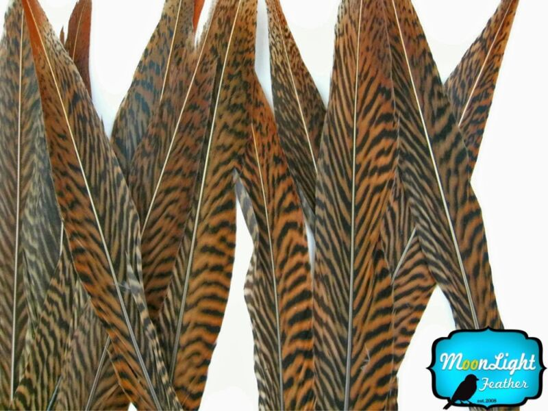 """Pheasant Feathers 10 Pieces 10-12"""" Golden Pheasant Tail Feathers"""