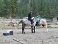 Riding lessons (all levels) and horse leasing