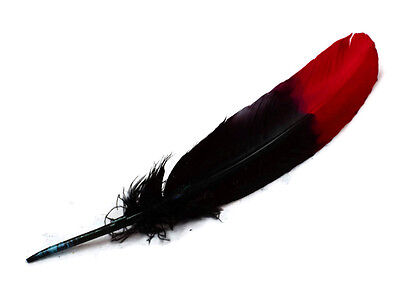 6 Pieces - Red & Black Two Tone Turkey Round Tom Wing Secondary Quill Feathers](Turkey Feather)