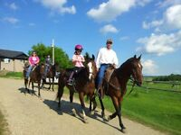 Beginner to Advanced Riding Lessons-Gift Certificates Available!
