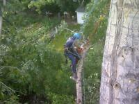 Arbour Crest Tree Services Available