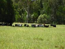3 PROPERTIES = 675 ACRES = 200 BREEDER CATTLE, CROPS, LIFESTYLE Yorklea Richmond Valley Preview