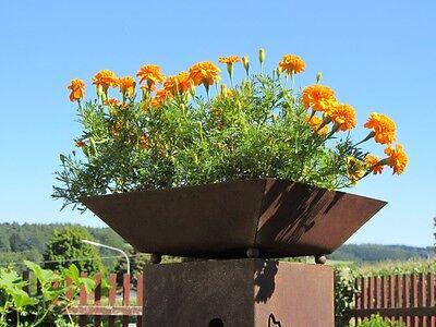 Pflanzschale groß 41x41cm Rost  Schale für Säule Rost Edelrost Rostsäule Garten