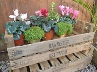 RUSTIC WOOD VINTAGE WOODEN APPLE VEGETABLE CRATE TRAY BOX BUSHELS