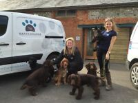 Dog Walkers Wanted - Happy Hounds Winchester are recruiting