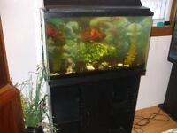 30GAL.FISH TANK FULL SETUP FOR SALE ,,AND  STAND