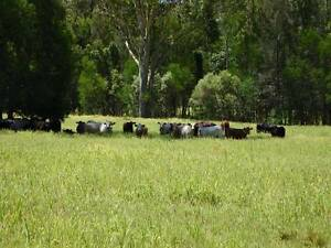 680 ACRES 200 CATTLE/CROP FARM, GOOD HOUSE & WATER, YARDS, SHED Yorklea Richmond Valley Preview