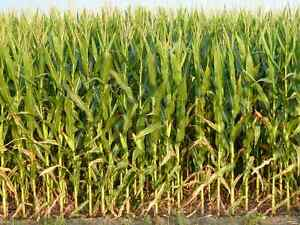 Booking 2016 High Moisture and Dry Corn