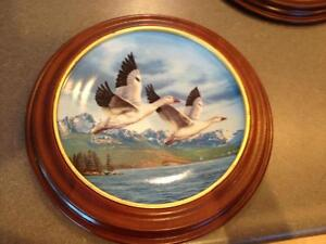 Ducks Unlimited Collection in Wall Mounts