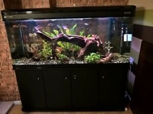 Looking for 5ft or 6ft aquarium with stand