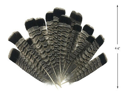 10 Pieces - Gray and Black Ruffed Grouse Tail Feathers Fly Tying Craft - Craft Suppliers