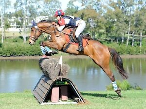 Afterschool Horse Help Needed Veresdale Scrub Ipswich South Preview