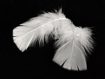 1 Pack - White Turkey T-Base Plumage Feathers 0.50 Oz. Wedding Suncatcher Supply