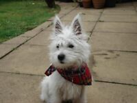 Scottish Terrier Tours - 5* Rated Family Run Tours Company, Tours All Over Scotland