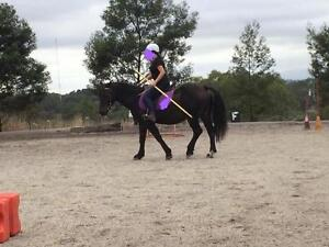Horse Riding Lessons Watsonia North Banyule Area Preview
