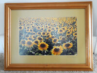 Sunflowers Limited Edition Print Photograph Geoff Dore Christchurch Pine Frame Good Condition
