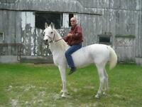 Horse riding club, Saddle up Looking for a few good men or women