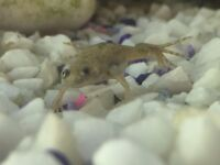 2 tropical miniature frogs