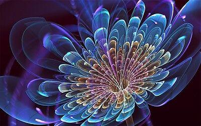 Fairy-seeds