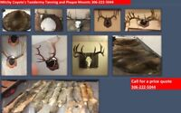 Antler mounts and tanning
