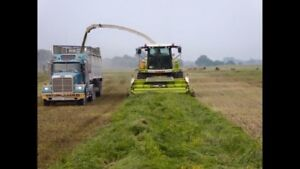 Custom Silage Harvesting