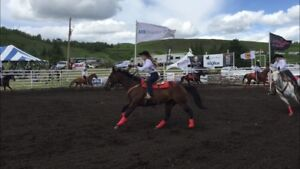 Perfect all around 11 year old mare.