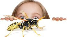 Pest Control From Only $99 Perth Northern Midlands Preview
