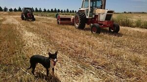 Contract Hay Balling, Hay for Sale Bathurst Bathurst City Preview