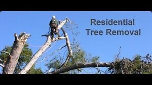 Lawn Services! Spring Clean Up's! Tree Removal! And More!!!