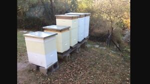 Bee   agistment available Camp Mountain Brisbane North West Preview
